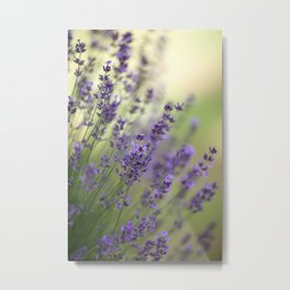 Dream Garden Lavender Metal Print