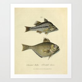 Fish by Sarah Stone, 1790 Art Print
