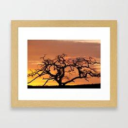 Acacia Trees at Dusk Framed Art Print