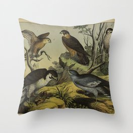 004 falco peregrinus Eurasian Hobby Common Lesser Cape Verde or Greater Cape Verde Kestrel Eurasian Sparrowhawk melierax musicus10 Throw Pillow