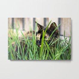 Cat in grass Metal Print
