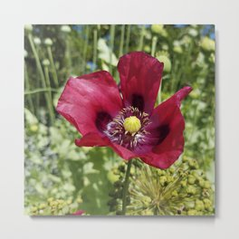 Pretty Purple Poppy Flower Metal Print