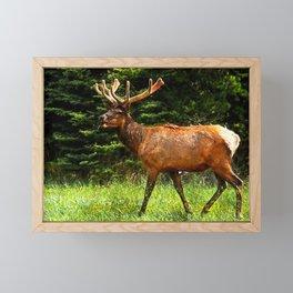 Elk Wildlife Framed Mini Art Print