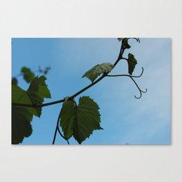 Sky Touchers Canvas Print