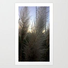 Wispy Morning Light Art Print