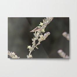Hummingbird Hovering over Hesperaloe Parviflora Flower on Black Metal Print