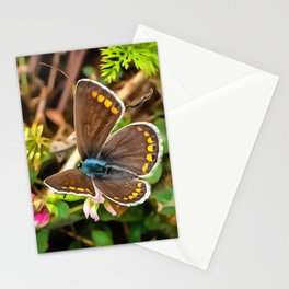 Common Blue Butterfly Polyommatus Icarus Stationery Cards