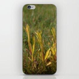 Divergent Grass iPhone Skin