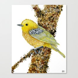 Yellow Warbler Tilly Canvas Print