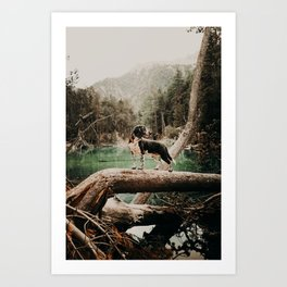 /// wild Max at the Lac Verde /// Valle Etroite Art Print