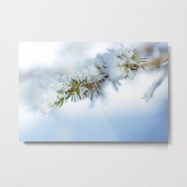 Snowy Spruce Needles 14 Metal Print