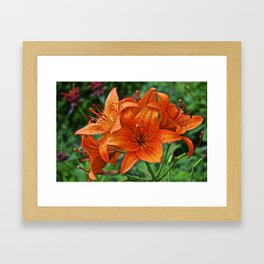 Orange Tiger Lilies - The Peace Collection Framed Art Print