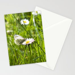 WHITE BUTTERFLY on COMMON DAISY Stationery Cards