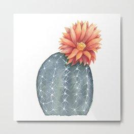 Gymnocalycium Baldianum - Cactus Flower Metal Print