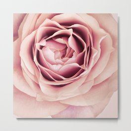 My Heart is Safe with You, My Friend - pale pink rose macro Metal Print