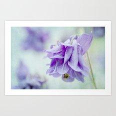 aquilegia blue Art Print