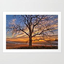 Winter Cottonwood Art Print
