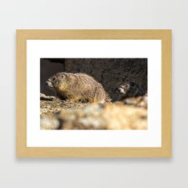 Two Marmots At Smith Rock Framed Art Print