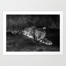 Lazy Leopard Art Print