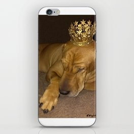 """""""PRINCE * PLaY-DoH"""" from the photo series""""My dog, PLaY-DoH"""" iPhone Skin"""