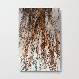 Rain leaves Metal Print