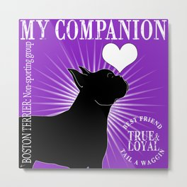BOSTON TERRIER – My Companion - Purple Metal Print
