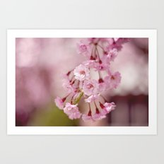 Weeping Willow Flowers Art Print