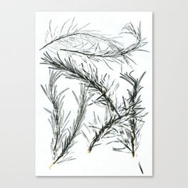 Rosemary Canvas Print