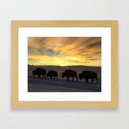 Bison Sunrise Framed Art Print