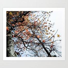 Fall II Art Print