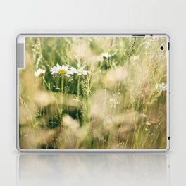 Oxeye Daisy among wild grasses. Norfolk, UK. Laptop & iPad Skin