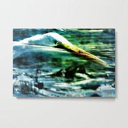 Egret Diving For Food Signed Metal Print