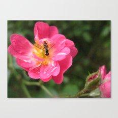Flower Bee Canvas Print
