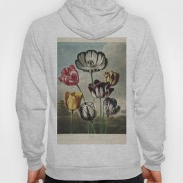 Reinagle, Philip (1749-1833)  - The Temple of Flora 1807 - Tulips Hoody