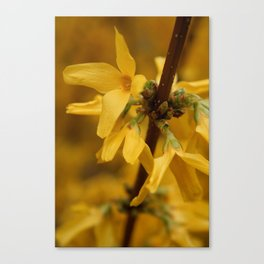 Bloomin' Yellow Canvas Print