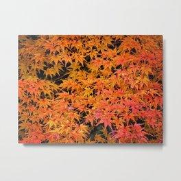 Japanese Maple Leaves Metal Print