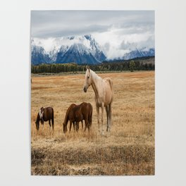 Mountain Horse - Western Style in the Grand Tetons Poster