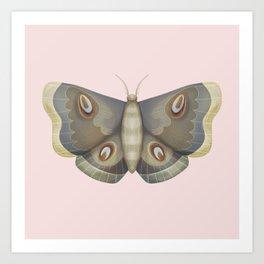 papillon de nuit Art Print