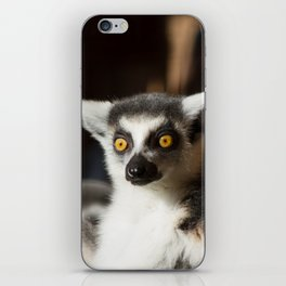 Lemur Catta iPhone Skin