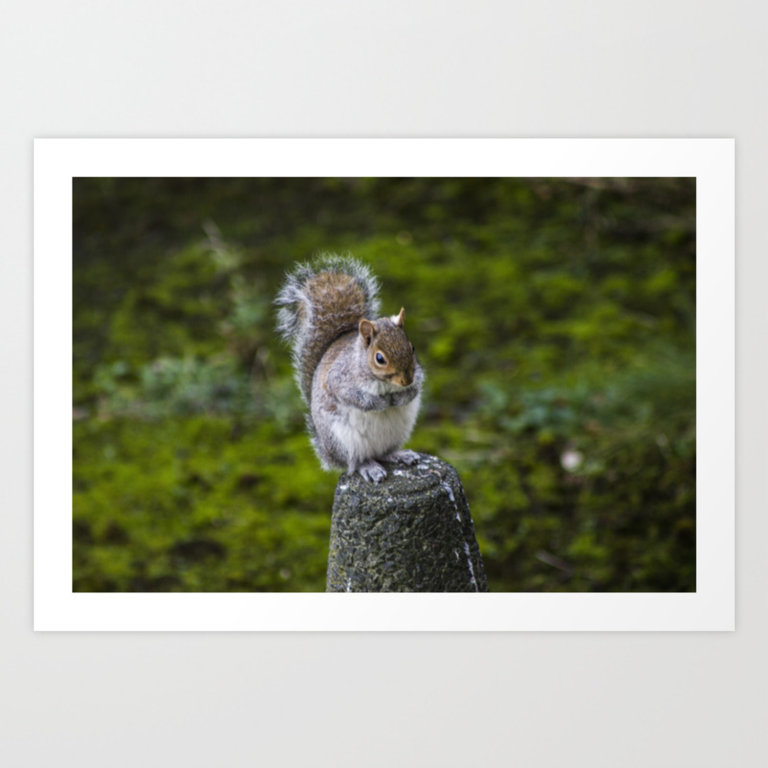 The Chubby Squirrel Art Print By Philrooney Society6 Cheers from the chubby squirrel! society6