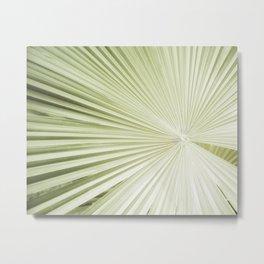 Fan Palm / Botanical Photography Metal Print