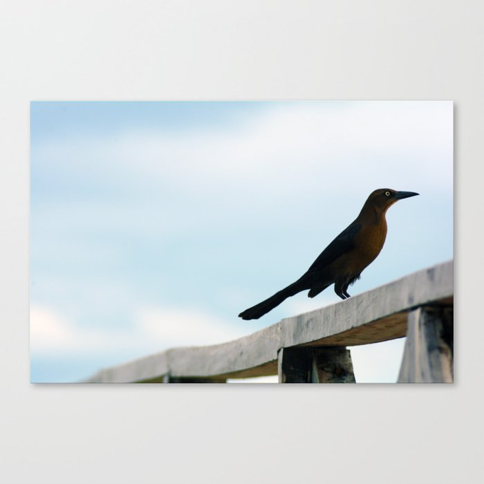 Bird collection _ 01 Canvas Print