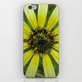 Ombre Daisy iPhone Skin