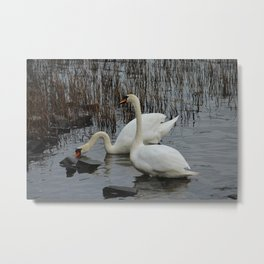 Mute Swans 2 Donegal Ireland Metal Print
