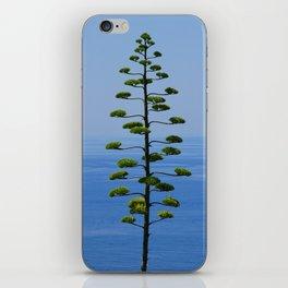 Pine Tree Before the Sea iPhone Skin