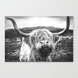 Highland Cow Nose Barbed Wire Fence Black and White Canvas Print