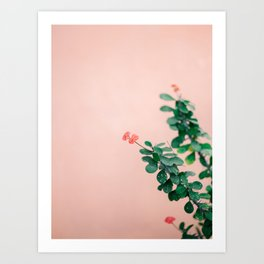 Floral photography print | Green on coral | Botanical photo art Art Print