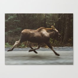 Running Moose Canvas Print