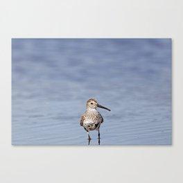 Western Sandpiper   Minimalist   Bird Canvas Print