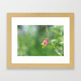 Columbine Bloom Framed Art Print